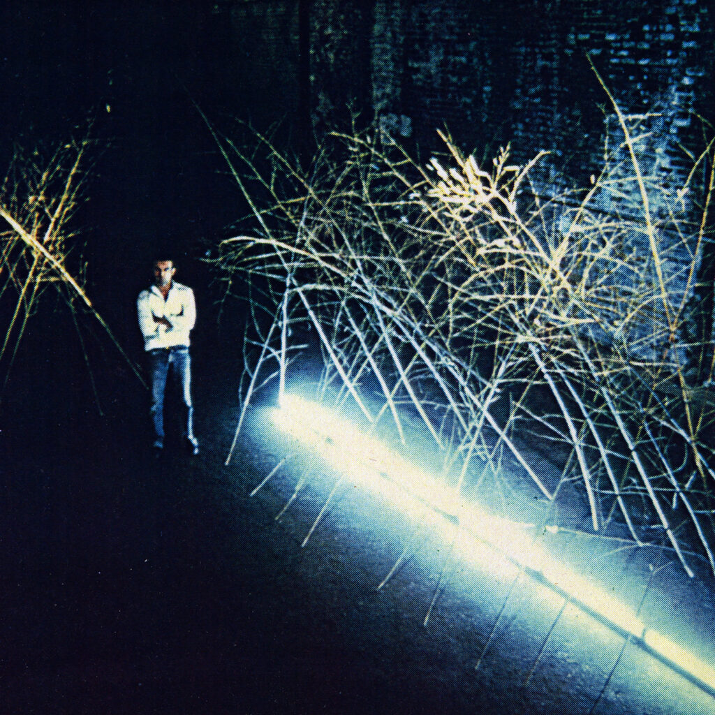 Bamboo and light installation