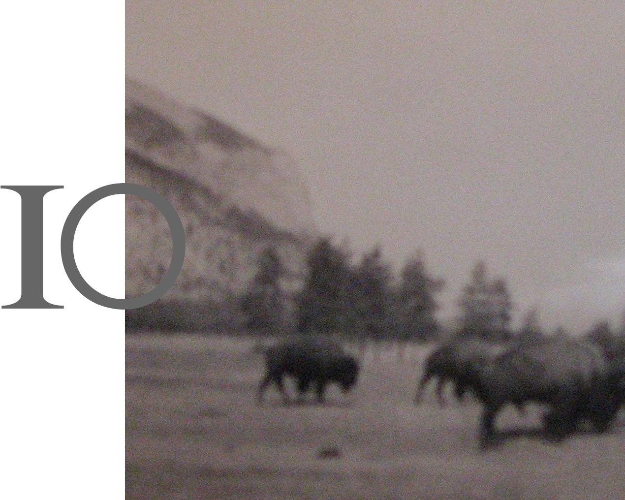 Image of buffalo